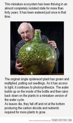 A small world inside a bottle…