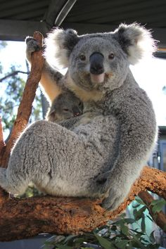 """Her name is Sydney, and she's already very proud of him."" 