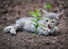 Growing. #cute ATTACKOFTHECUTE.COM