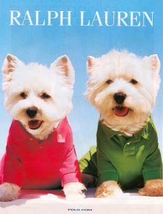 Westie Dog Clothes West Highland White Terrier Puppy Dogs Puppy Dog Clothing / Dogs In Clothes #DogsInClothes