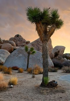 Joshua Tree National Park - Ready For A Family Camping Trip? Most Visited National Parks, California National Parks, Desert Photography, Landscape Photography, Great Vacations, Vacation Trips, California Wallpaper, California Camping, California California