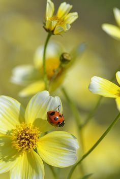 SEASONAL – SPRING – the warmer temperatures of springtime bring out the new born lady bugs to discover and explore their surroundings, photo by myu-myu.