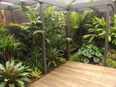Tropical Plants In A London Garden Urban Tropics Exotic Garden