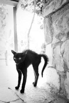 Cat (05) 20Jul10, Phaistos (Grece)  by philippe leroyer