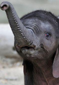 Elephant Calf by Josef Gelernter