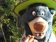 Magic Kingdom It's A Small World Animal Kingdom Epcot Hollywood Disney Disney Resorts Disney Resorts, Disney Disney, Animals Of The World, Epcot, Magic Kingdom, Animal Kingdom, Orlando, Photo Galleries, Orlando Florida