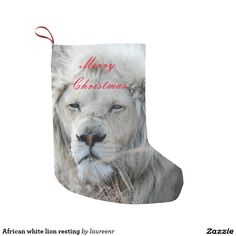 Shop South Africa White Lion resting Small Christmas Stocking created by laureenr. South African Lions, Small Christmas Stockings, Mountain Lion, Animal Kingdom, Rest, Gifts, Animals, Animales, Presents
