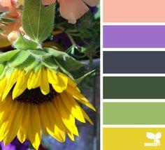 market hues - http://design-seeds.com