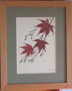 Maple by Liming Twanmoh, pressedflora.com