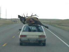Montana:  If you're from Montana, chances are you enjoy hunting season just as much as you do Christmas, so you might find this image of a rickety car with a heavy moose atop of it understandable. This hunting-mad state has a vast variety of wildlife, from grizzly bears to antelopes to moose,  so this picture is probably just the norm!