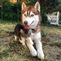 Quien tenga una amistad verdadera, es dueña de todo un tesoro.  Feliz martes!!!   #PetsWorldMagazine #RevistaDeMascotas #Panama #FelizMartes #Mascotas #MascotasPty #MascotasAdorables #Perros #PerrosPty #PerrosPanama #Gatos #GatosPty #Dogs #DogLovers #Cats #CatLover #SuperTiernos
