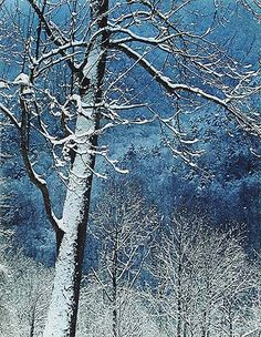 Tree and Mountain Valley, Great Smoky Mountains National Park, Tennessee - Eliot Porter, 1969