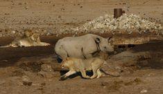 Uk Trip, Wildlife Photography, Safari, National Parks, September, Travel, Instagram, Viajes, Destinations