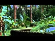 Mysterious Island   Full Movie - http://www.nopasc.org/mysterious-island-full-movie/