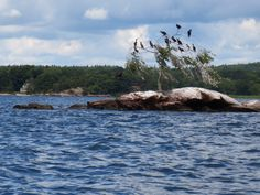 Beautiful St. Lawrence river in Canada!  Cormorants roosting.