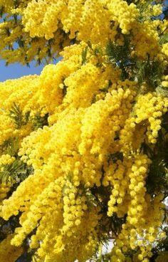 Sueños compartidos : Naturaleza vestida de amarillo