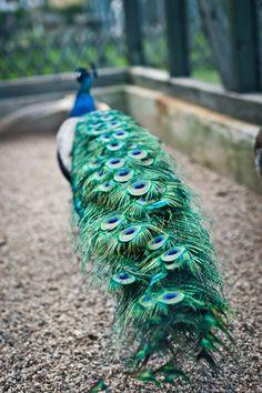 My visit in zoo;)