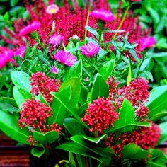 Abonnement de jardini re fleurie - Jardiniere automne hiver ...