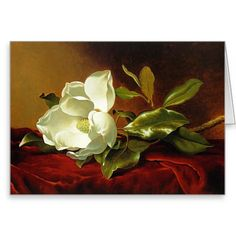 Martin Johnson Heade - magnolia en el terciopelo Tarjeta De Felicitación