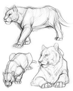 ▷ 1001 + ideas and inspirations for beautiful pictures to paint! - lioness drawing method, beautiful pictures to paint yourself, drawings with pencil, animal, big cat - Cute Animal Drawings, Animal Sketches, Art Drawings Sketches, Easy Drawings, Drawing Animals, How To Draw Animals, Pencil Sketch Drawing, Drawing Base, Drawing Ideas