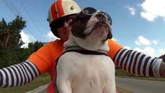 While riding on a motorcycle with her human Christine Sutton, a fearless English Bulldog named Sweets returns a courtesy wave to another rider on the road. When Sweets isn't being her badass biker ...