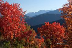 photo by Willie Holdman.... Autumn colors in the Rockies.