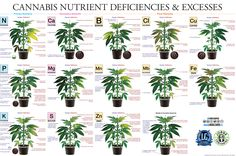 marijuana-deficiency-chart-jorge-cervantes.jpg (4000×2658)