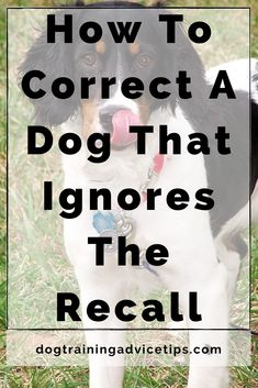 Is Your Dog Ignoring Your Recall? Here's How to Correct It. #dogtrainingadvicetips #dogbehavior #dogtraining #dogobedience #dogtrainingtips #dogtips #dogrecall #dogs Puppy Training Tips, Training Your Dog, Train Info, Stop Dog Barking, Dog Information, Dog Facts, Dog Behavior, New Tricks, Dog Treats