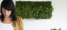Le mur végétal modulaire 'Karoo' est un produit belge, développé par D&M en collaboration avec le jeune designer Jiri Vermeulen dans le cadre de son projet de fin d'études à la Haute École Artesis d'Anvers.
