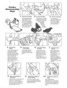 parts of a rooster with names of feathers poultry showmanship rh pinterest com Poultry Showmanship Questions Poultry Showmanship Scorecard