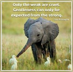 only the weak are cruel . Gentleness can only be expected from the strong.