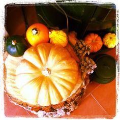 O Outono chegou a minha casa * Autumn arrived at my home