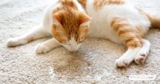 My Home Carpet Cleaning NYC Offers Eco-Friendly Carpet Cleaning - Top-Trends Pet Urine, Pet Odors, Home Carpet, Kinds Of Salad, How To Clean Carpet, Nyc, Cleaning, Animals, Eco Friendly