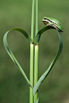 ♥ Amor y Corazones ♥ by:mehmet karaca (via:earth-song) I Love Heart, With All My Heart, Happy Heart, Love Is All, Heart In Nature, Heart Art, Earth Song, Funny Frogs, Fotografia Macro