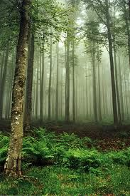 Black Forest in Germany. Where the Grimm brothers based their tales.
