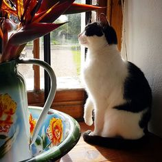 A bubble of sunlight Instagram Accounts, Cats Of Instagram, Window Sill, Big Cats, Sunlight, Bubbles, Animals, Image, Animales