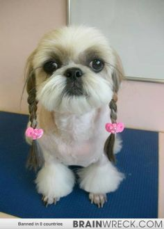 21 Dogs Whose Groomers Took Things A Little Too Far. I Can't Stop Laughing! - Brainwreck - Your Mind. Blown.