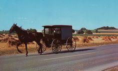 Amish market wagon, Lancaster