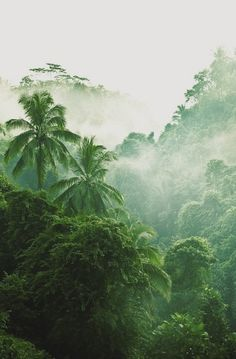 Fresh Fresh Green ~`* ~ Palm Tree Heaven ~ Greens everywhere