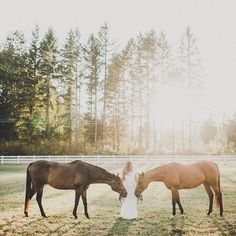 Dapplebay ™ (@dapplebayco) • Instagram photos and videos My Horse, Horse Girl, Horses, Equestrian, Moose Art, Photo And Video, Videos, Photos, Animals