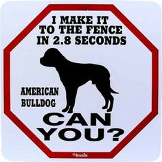Can You Race an American Bulldog Sign, from Dogstuff.com. A humorous conversation piece for American Bulldog families that also serves as a valid warning to strangers,