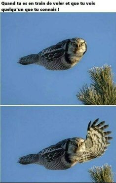 36 Fresh and Dank Memes To Improve Your Day - Funny Gallery Funny Animal Jokes, Cute Funny Animals, Funny Animal Pictures, Animal Memes, Cute Baby Animals, Funny Photos, Animal Captions, Funny Birds, Really Funny Memes