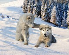 A paw moment Friend 2, Photo Book, Mammals, Knight, Husky, Cute Animals, Dogs, Nature, Wolves Art
