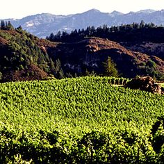The Pride Mountain Winery has some gorgeous views, and deliciously drinkable wines! If you're headed through the Napa Valley for a wine tour, start here..and by the time you make it to your Santa Monica vacation rental, you'll have collected some tasty treats to try while you tan!
