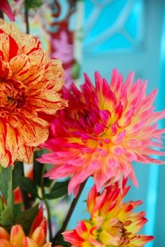 "Bright dahlias.  To followers of this board, I will now be pinning most floral photos to my new board, ""4 Flowers and all Things Floral."""