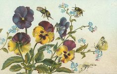 Pansies, forget-me-nots, with 2 cabbage moths and bumblebees ~ very nice!