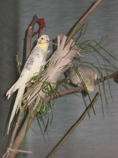 Cut slits to tube for easier access to smaller parrots. Fill with millet, straws and twigs.