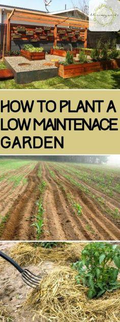 Ways on how to plant a low maintenance garden. | Gardening Tips and Tricks | Gardening Hacks | Gardening Ideas | Home Garden Ideas