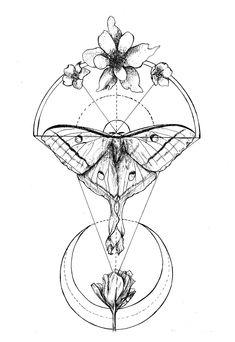lunar moth drawing - Google Search