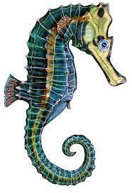 Seahorse Anatomy Elina Mer